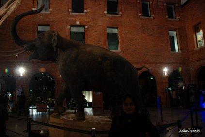 La Nuit des Musees-Toulouse (1)