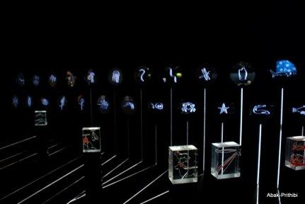 La Nuit des Musees-Toulouse (2)