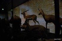 La Nuit des Musees-Toulouse (4)