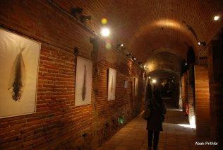 Toulouse-EDF (22)