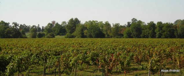 Wine of France (1)