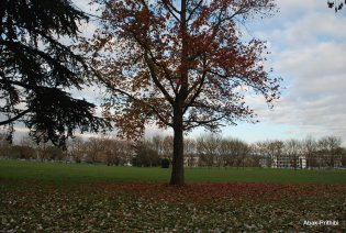 Fall - Toulouse 2013 (1)