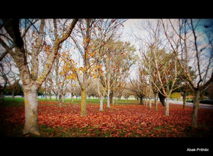 Fall - Toulouse 2013 (13)