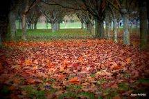 Fall - Toulouse 2013 (14)