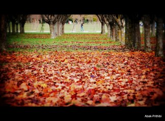 Fall - Toulouse 2013 (15)