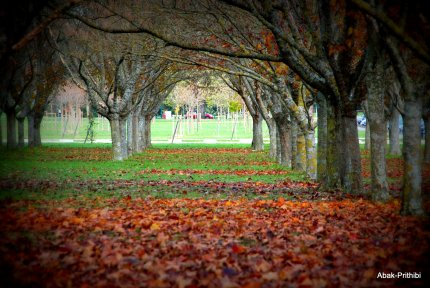 Fall - Toulouse 2013 (16)