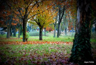 Fall - Toulouse 2013 (18)
