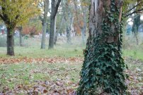 Fall - Toulouse 2013 (19)