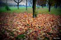 Fall - Toulouse 2013 (20)