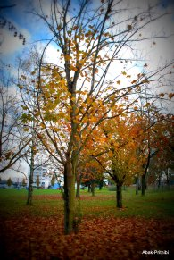 Fall - Toulouse 2013 (21)