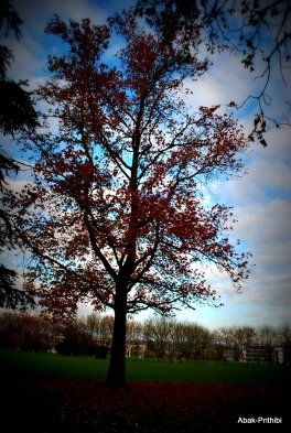 Fall - Toulouse 2013 (24)