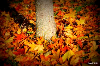 Fall - Toulouse 2013 (8)