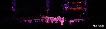 Cirque de noel-Toulouse 2013 (10)