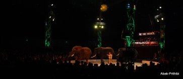 Cirque de noel-Toulouse 2013 (12)