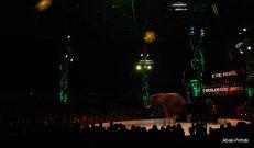Cirque de noel-Toulouse 2013 (13)