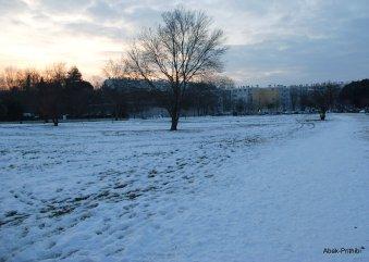 Toulouse-snow fall (1)