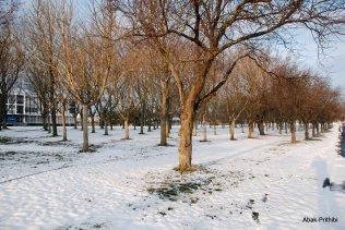 Toulouse-snow fall (10)