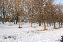 Toulouse-snow fall (11)