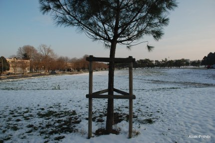 Toulouse-snow fall (5)