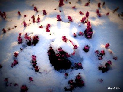 Toulouse-snow fall (9)