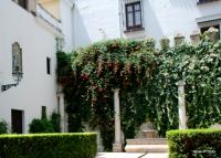 Alcázar of Seville, Spain (35)