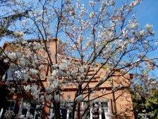 Magnolia @ Toulouse (10)