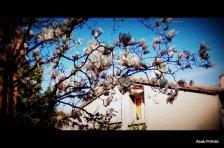 Magnolia @ Toulouse (11)