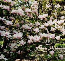 Magnolia @ Toulouse (5)