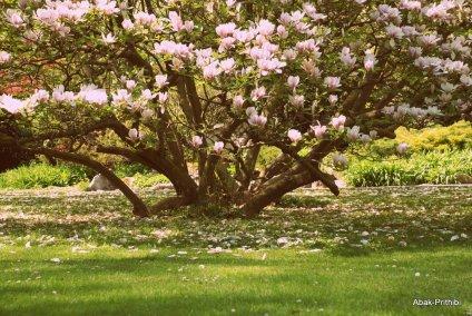 Magnolia @ Toulouse (7)