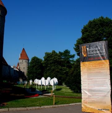 Tallinna lillefestival, Estonia (3)
