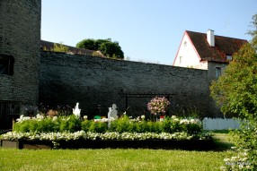 Tallinna lillefestival, Estonia (8)