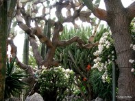 Jardin Exotique de Monaco (10)