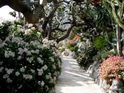 Jardin Exotique de Monaco (11)