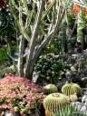 Jardin Exotique de Monaco (12)