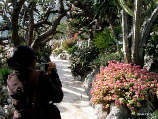 Jardin Exotique de Monaco (13)