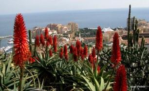 Jardin Exotique de Monaco (15)