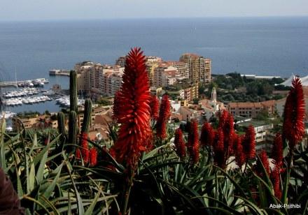 Jardin Exotique de Monaco (16)