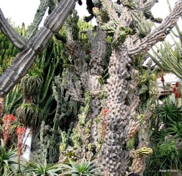 Jardin Exotique de Monaco (20)