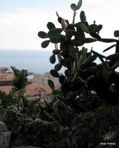 Jardin Exotique de Monaco (21)