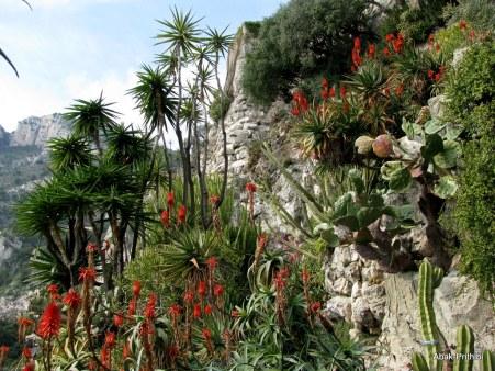 Jardin Exotique de Monaco (22)