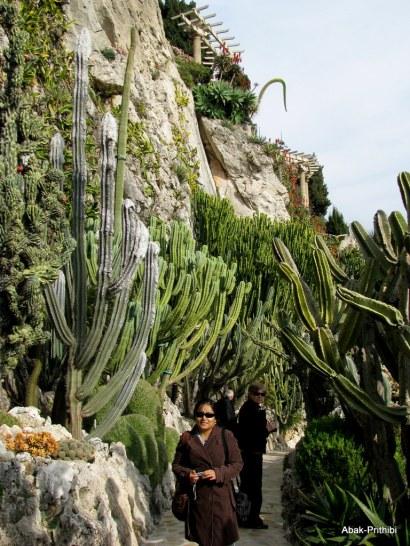 Jardin Exotique de Monaco (25)
