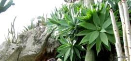 Jardin Exotique de Monaco (28)