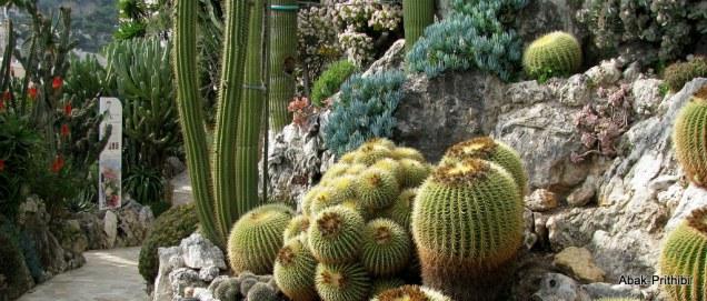 Jardin Exotique de Monaco (32)