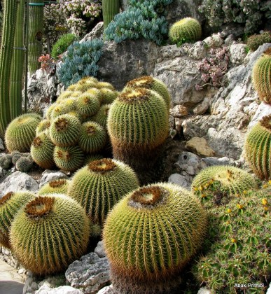 Jardin Exotique de Monaco (33)