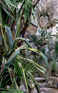 Jardin Exotique de Monaco (36)
