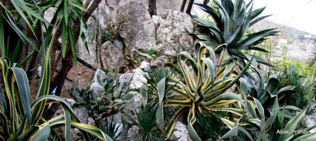 Jardin Exotique de Monaco (37)