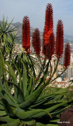 Jardin Exotique de Monaco (41)