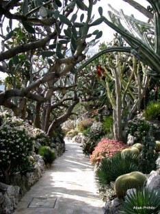 Jardin Exotique de Monaco (8)