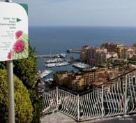 Jardin Exotique de Monaco (9)