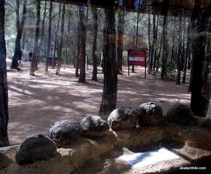 Meze dinosaur park, South France (6)